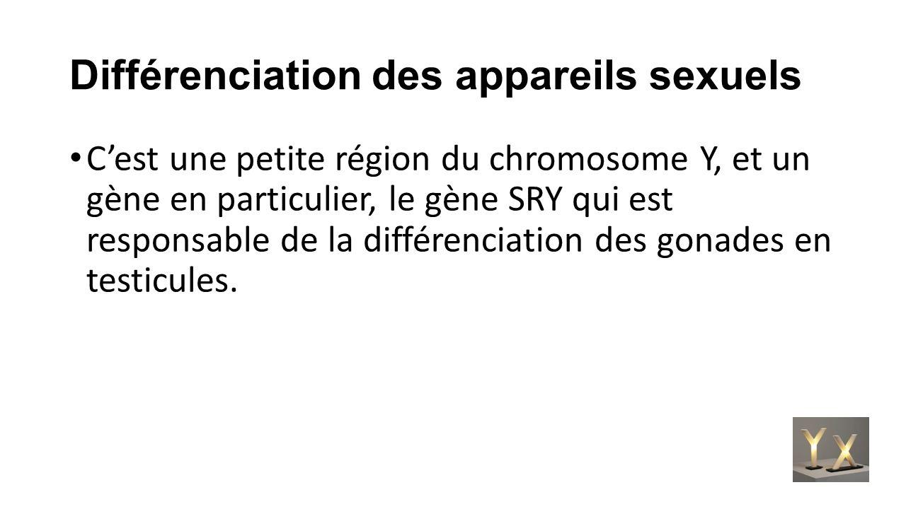 Différenciation des appareils sexuels