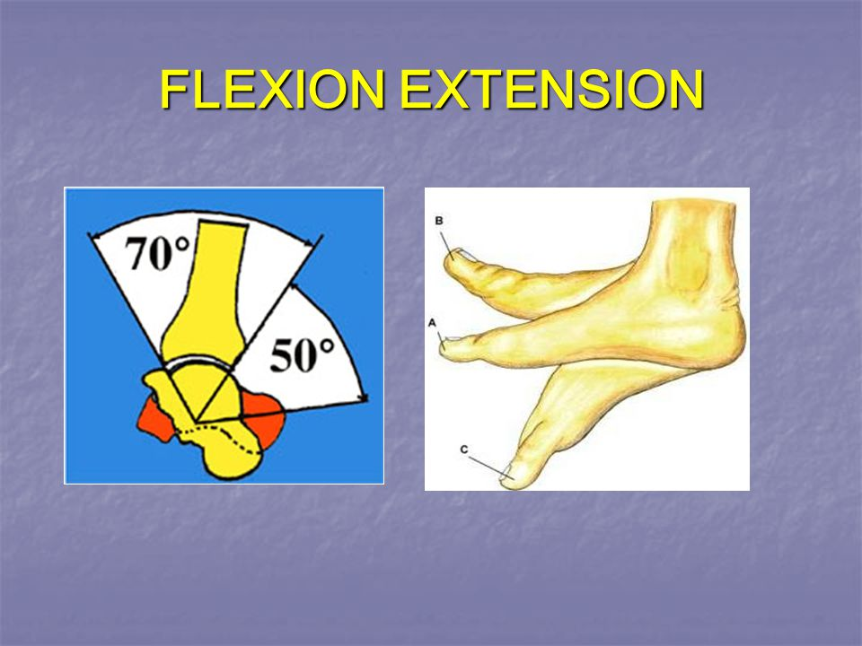 FLEXION EXTENSION