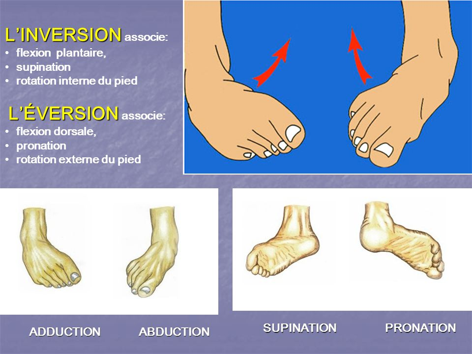 L'INVERSION associe: flexion plantaire, supination