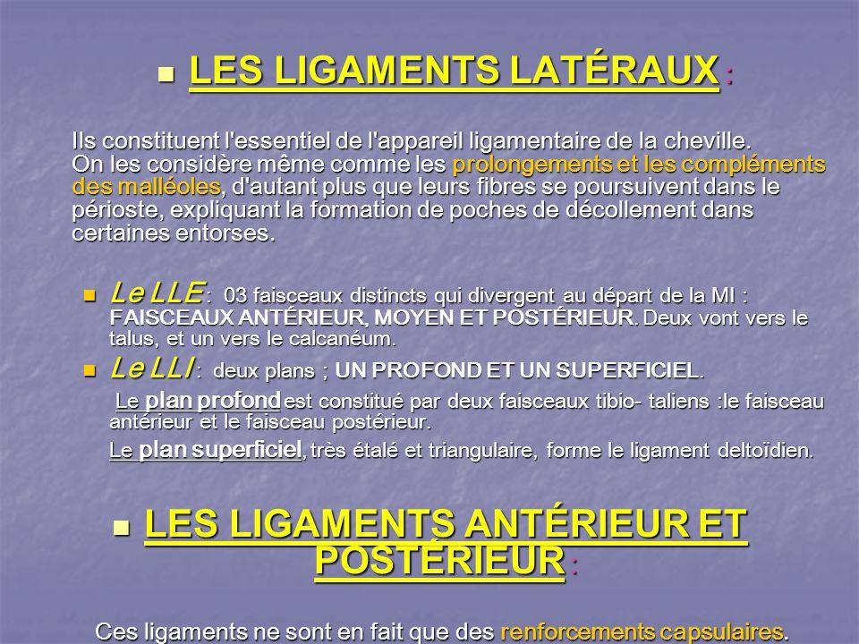 LES LIGAMENTS LATÉRAUX :