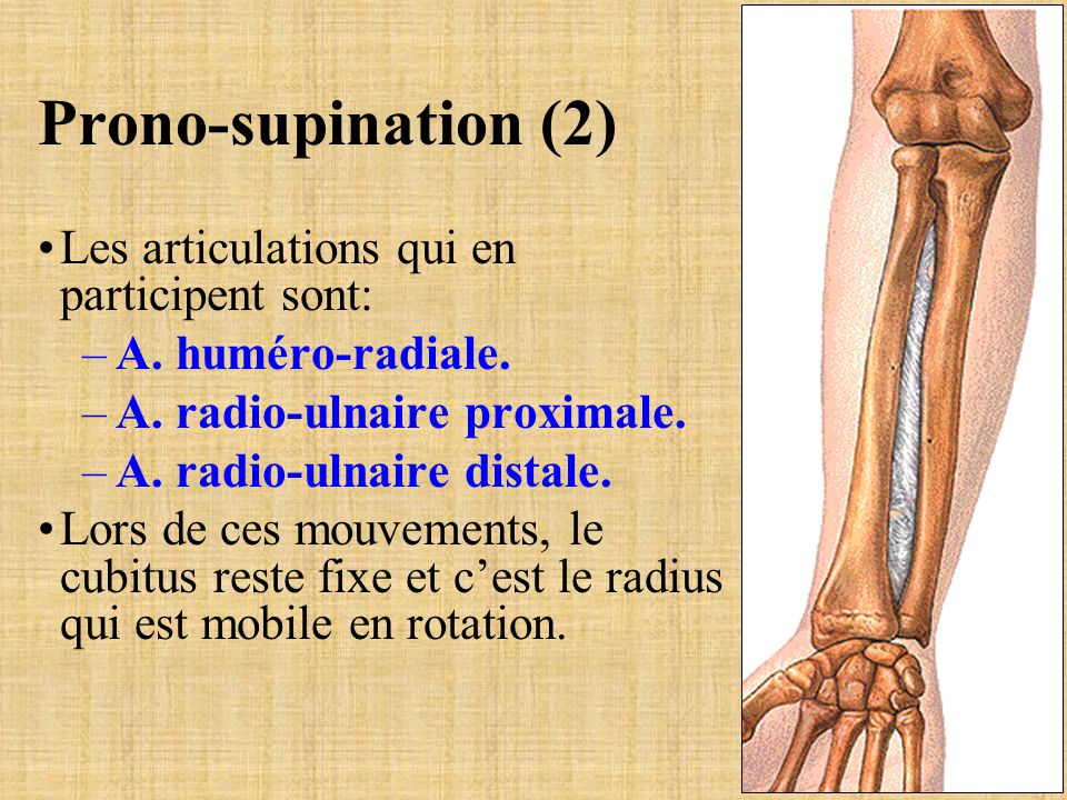 Proximal Definition   Free Here