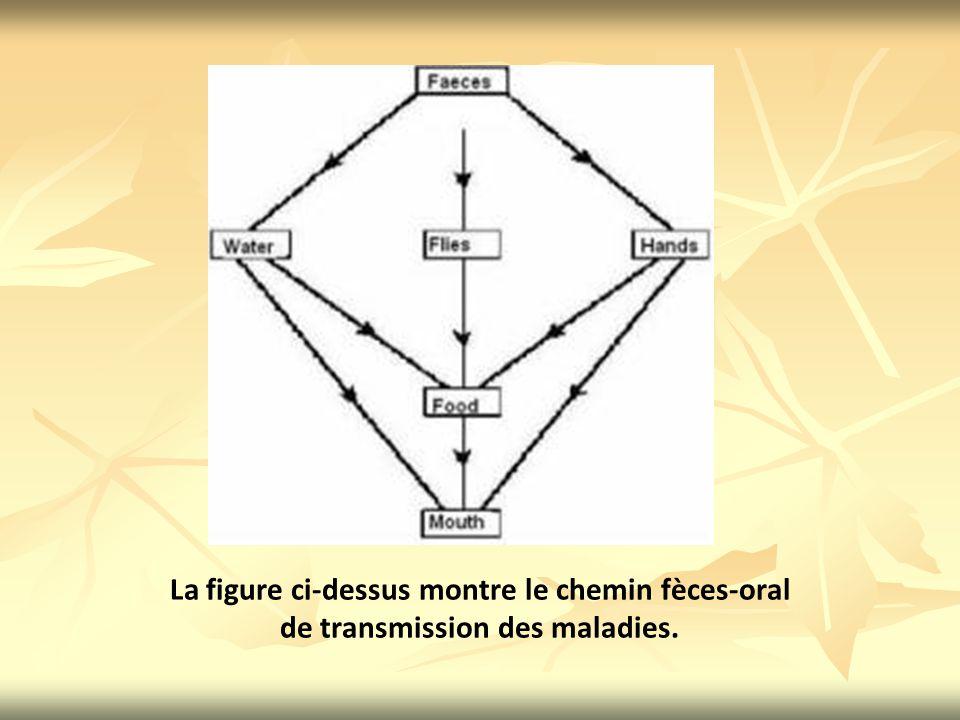 La figure ci-dessus montre le chemin fèces-oral
