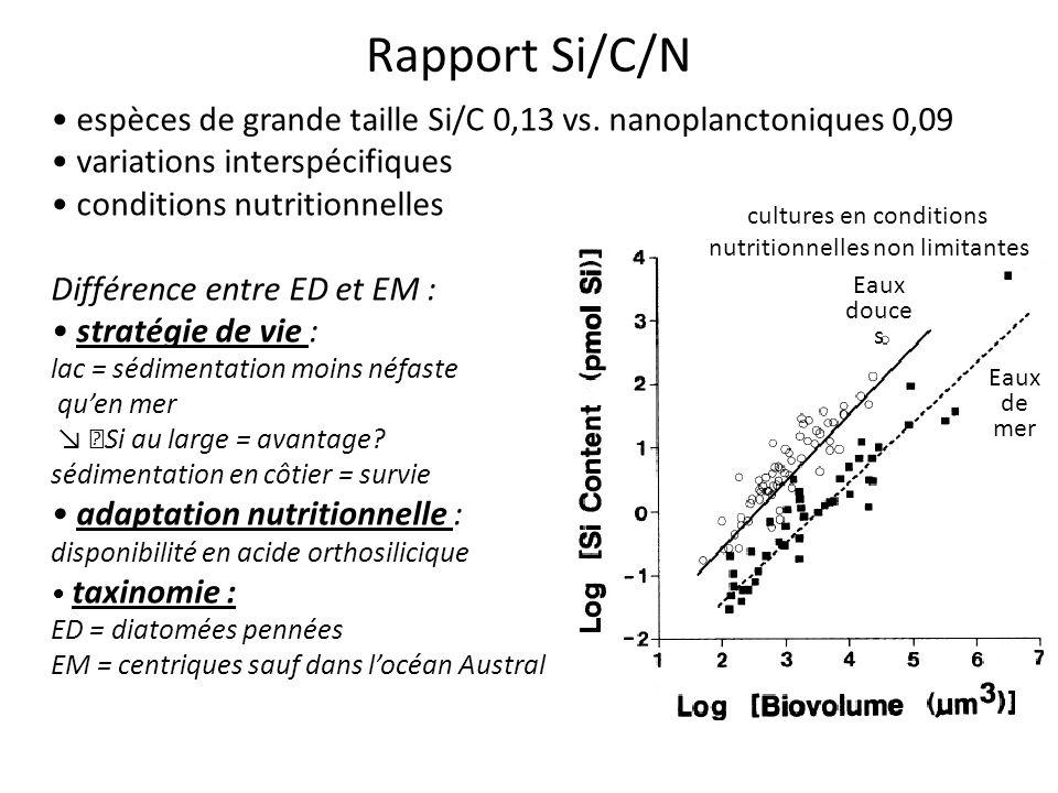 Td nutrition des producteurs primaires ppt t l charger - Difference entre sisal et jonc de mer ...