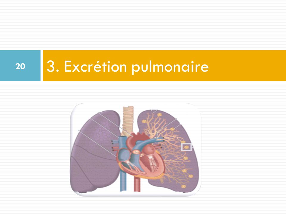 Elimination des médicaments - ppt video online télécharger