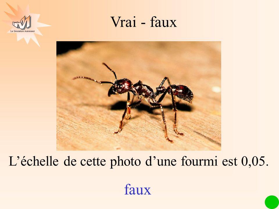 L'échelle de cette photo d'une fourmi est 0,05.