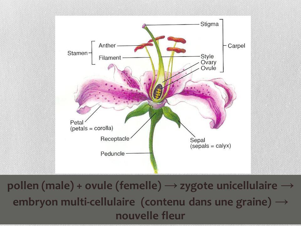 male femelle différence plante