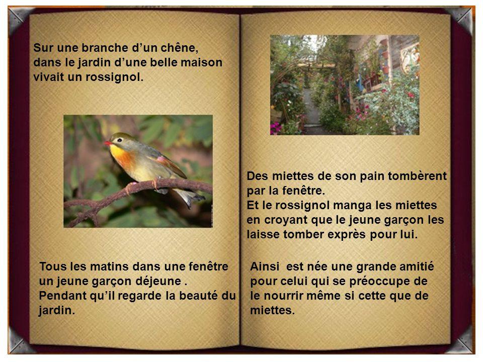 Sur une branche d'un chêne, dans le jardin d'une belle maison vivait un rossignol.