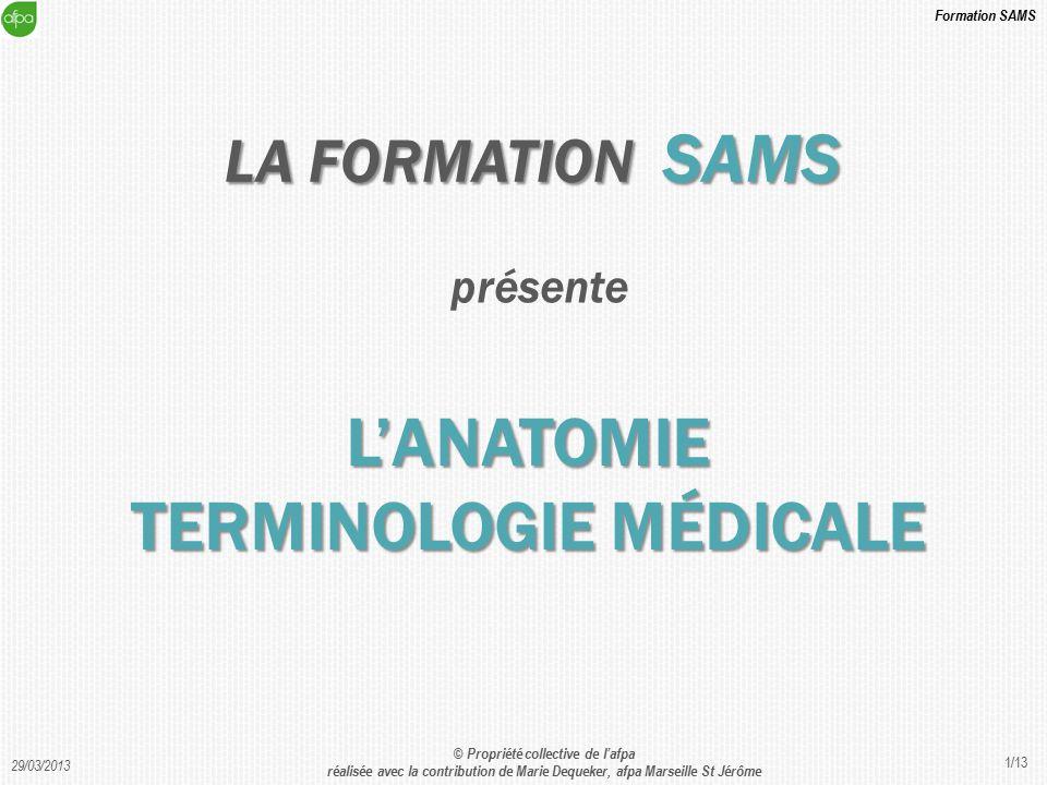 Fantastisch Terminologie Der Anatomie Bilder - Anatomie Ideen ...