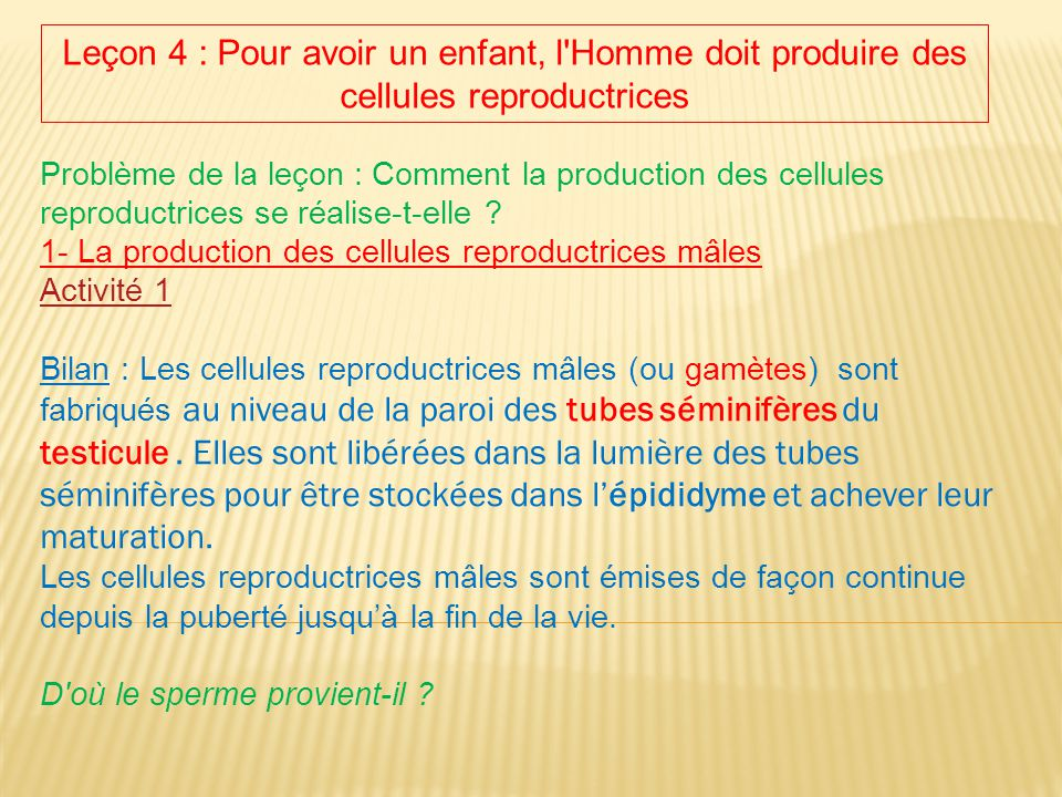 Leçon 4 : Pour avoir un enfant, l Homme doit produire des cellules reproductrices
