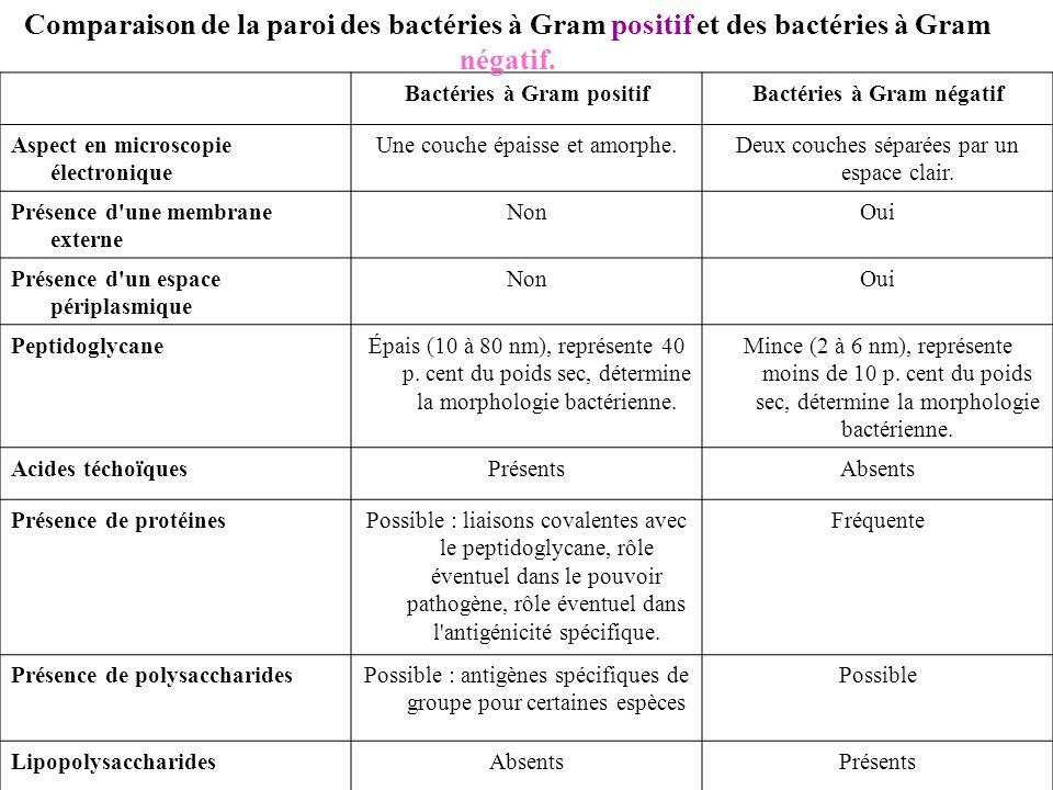 Bactéries à Gram positif Bactéries à Gram négatif