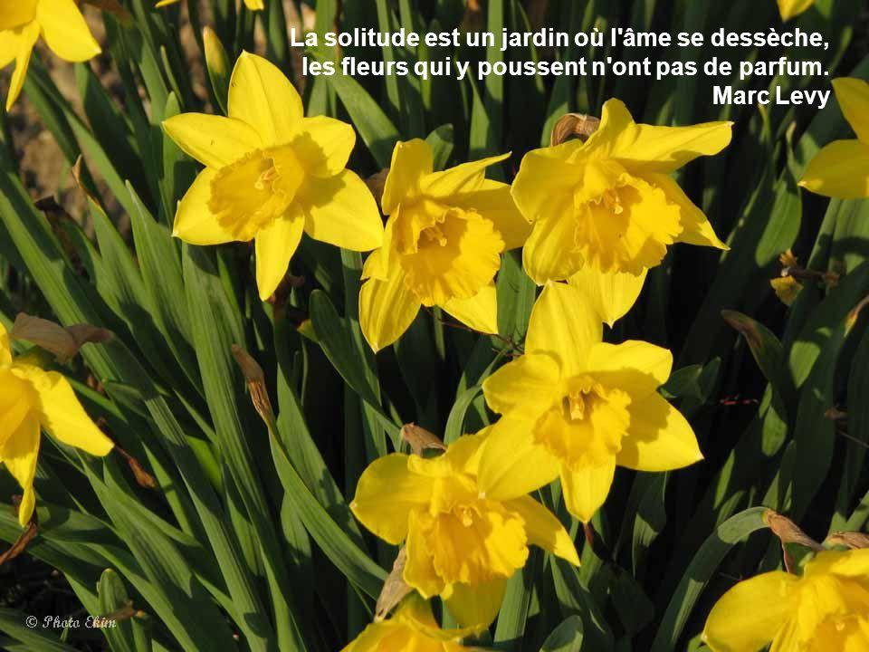 Emejing au fleur de ton jardin ideas for Un jardin de fleurs
