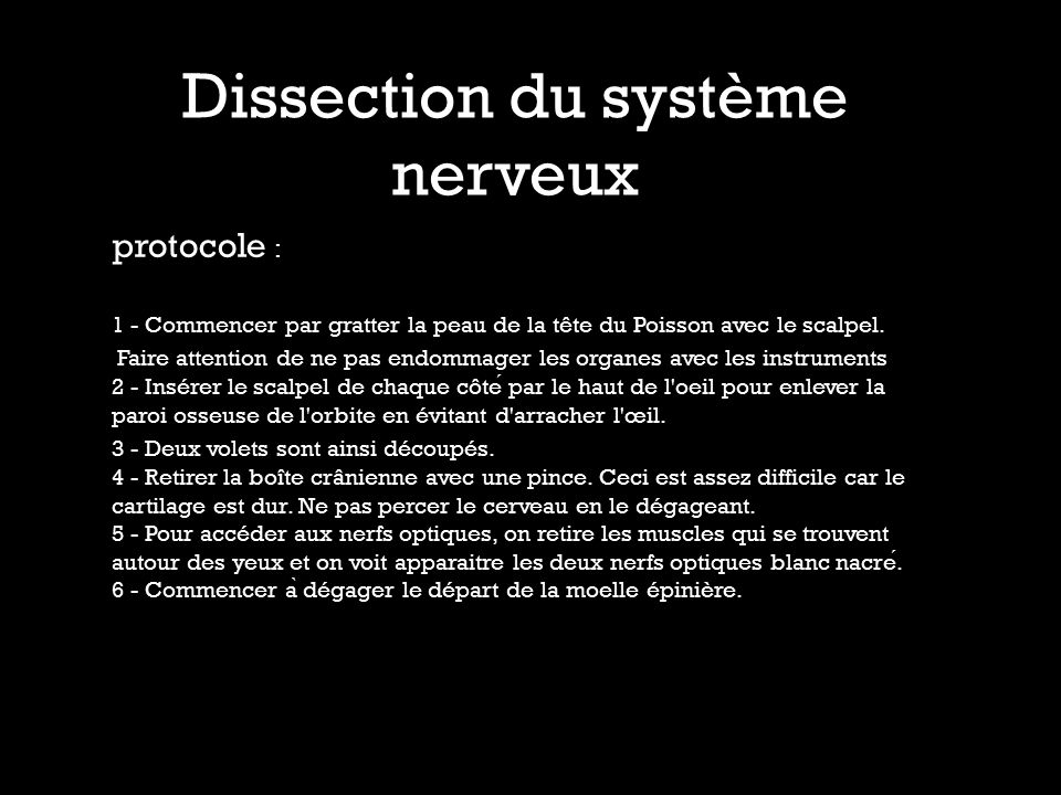 Dissection du système nerveux