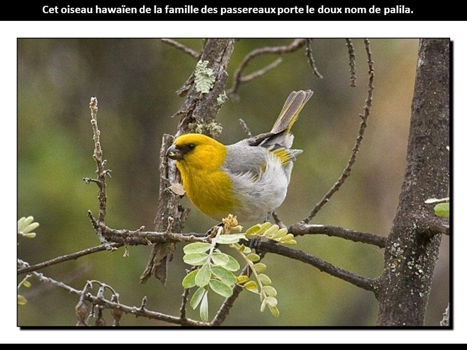 Les plus beaux oiseaux rares ppt t l charger - Nom de famille americain les plus portes ...