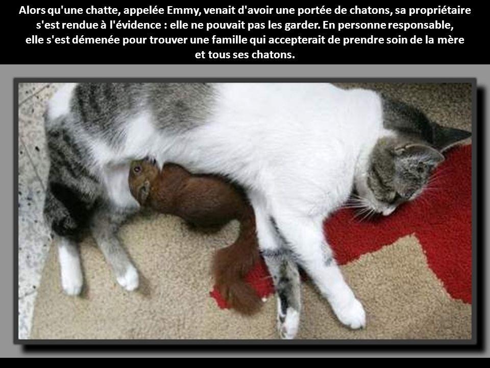 Une bonne maman une maman chat qui adopte un b b cureuil en plus de sa port e de chatons y a - Temps de portee d une chienne ...
