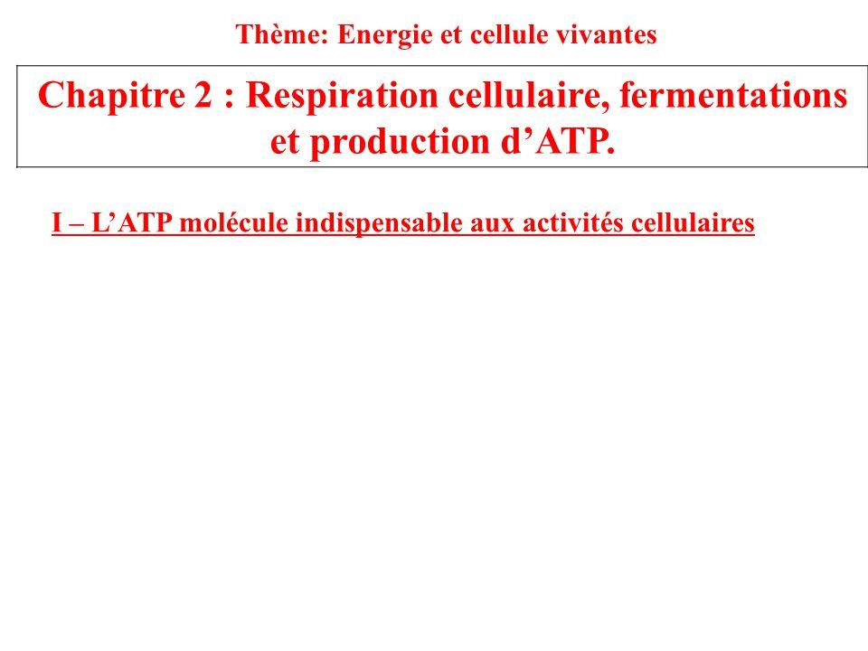 Thème: Energie et cellule vivantes