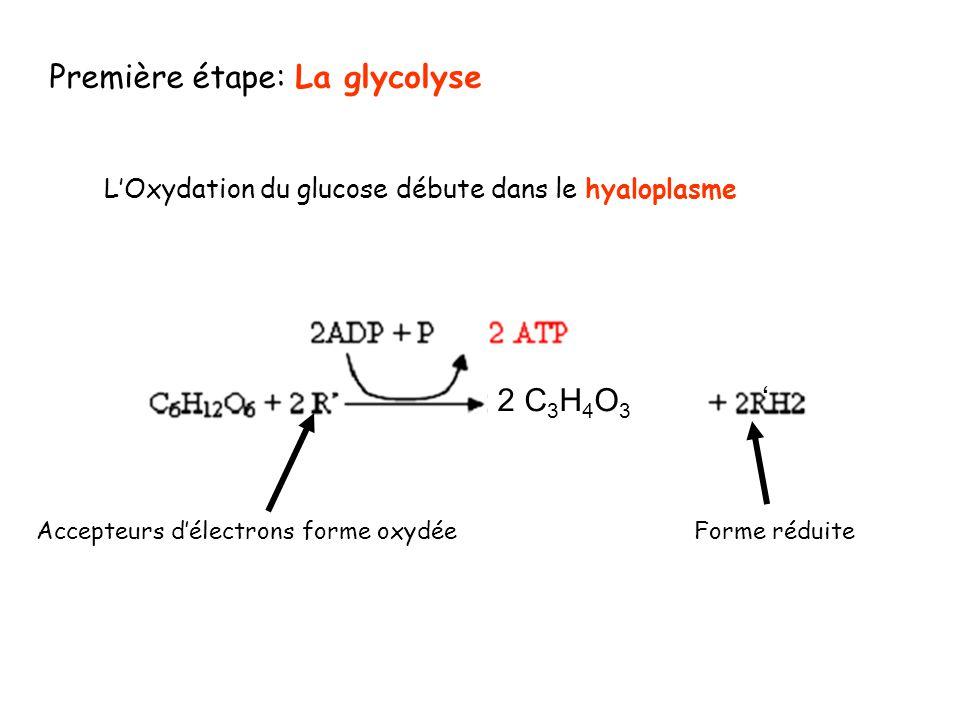 Première étape: La glycolyse