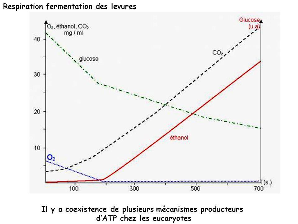 Respiration fermentation des levures