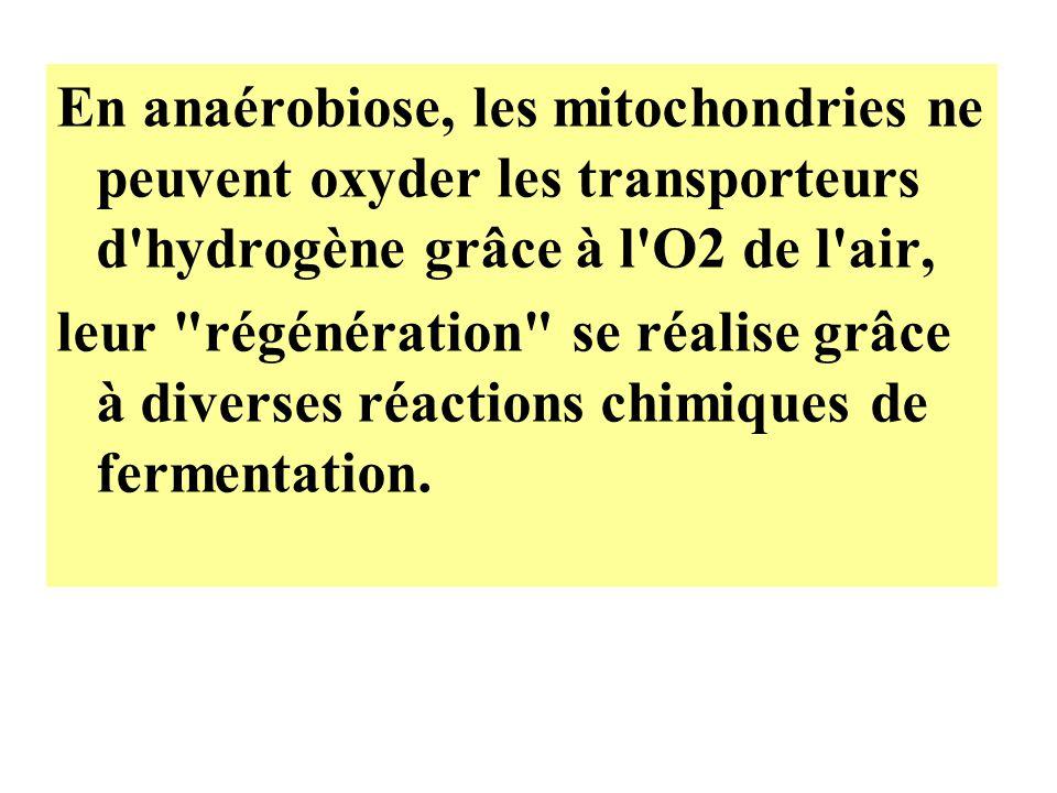 En anaérobiose, les mitochondries ne peuvent oxyder les transporteurs d hydrogène grâce à l O2 de l air,