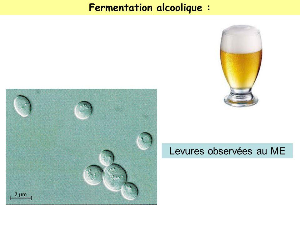 Fermentation alcoolique :