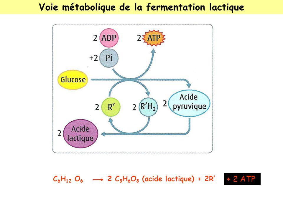 Voie métabolique de la fermentation lactique