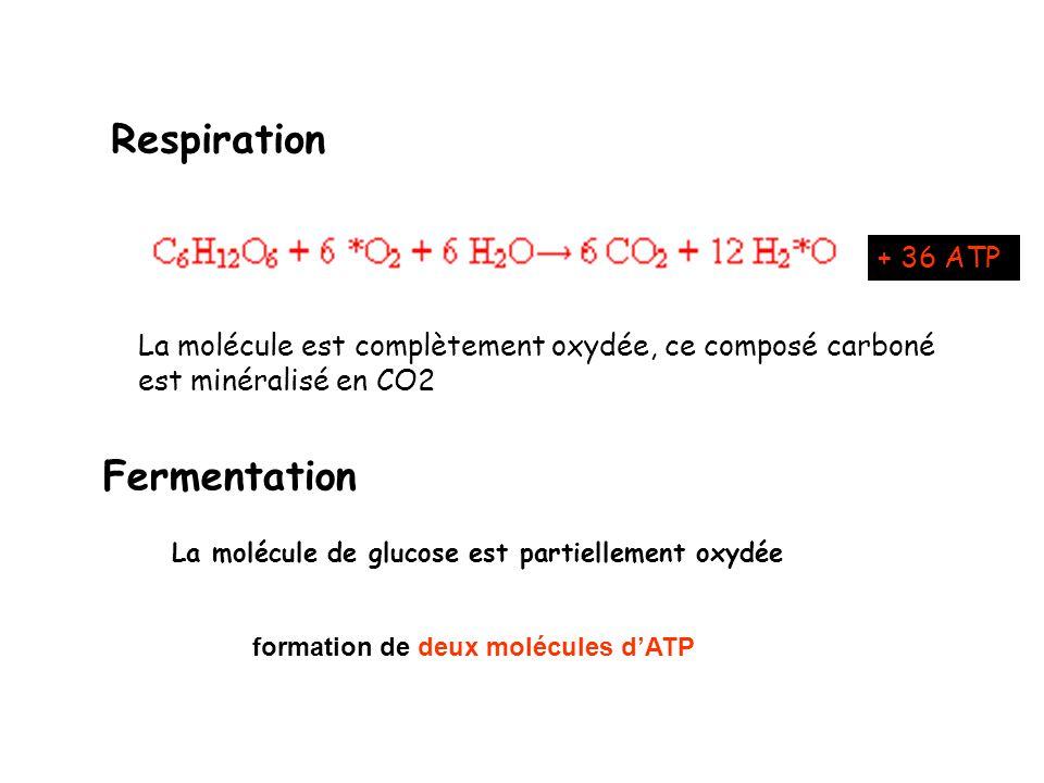 La molécule de glucose est partiellement oxydée