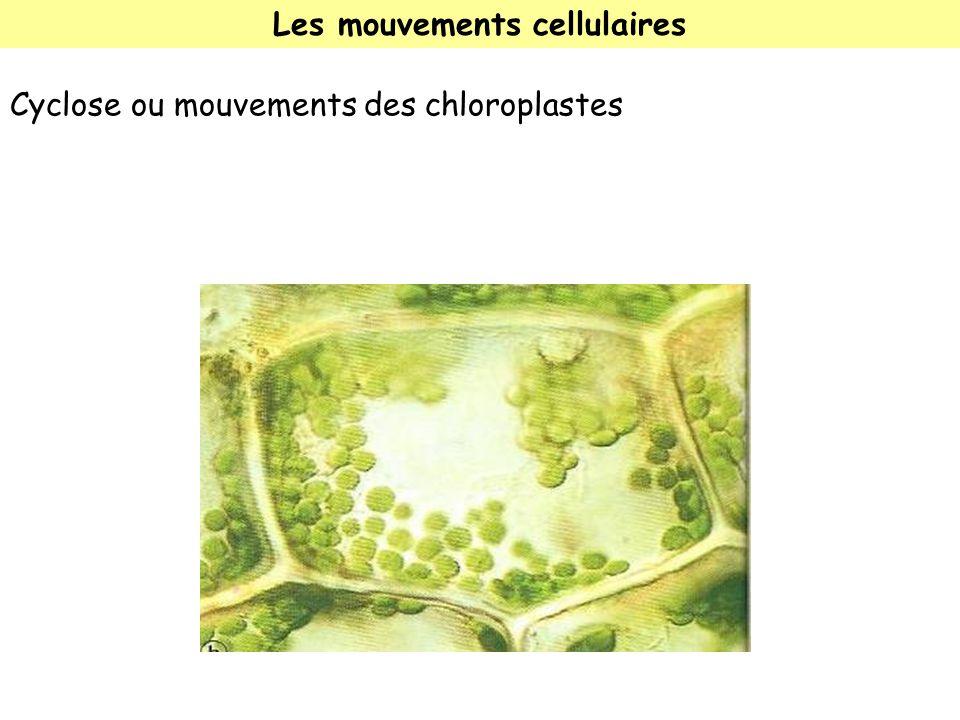 Les mouvements cellulaires