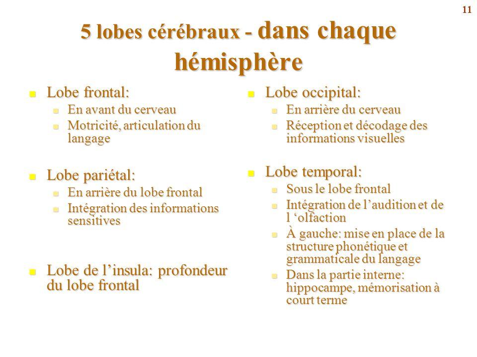 5 lobes cérébraux - dans chaque hémisphère
