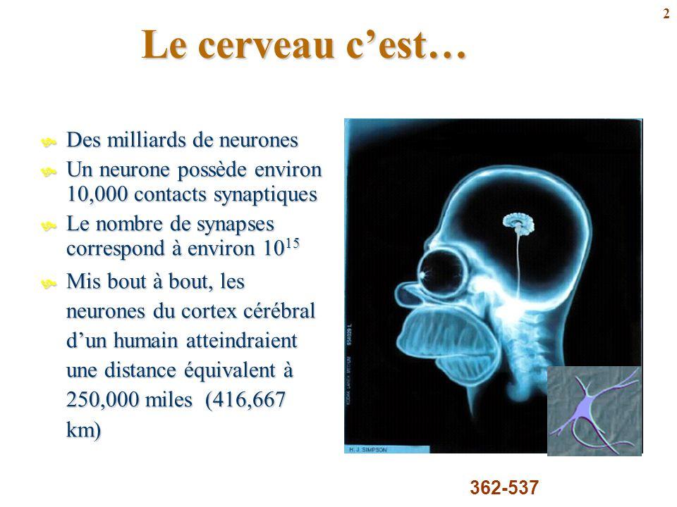 Le cerveau c'est… Des milliards de neurones