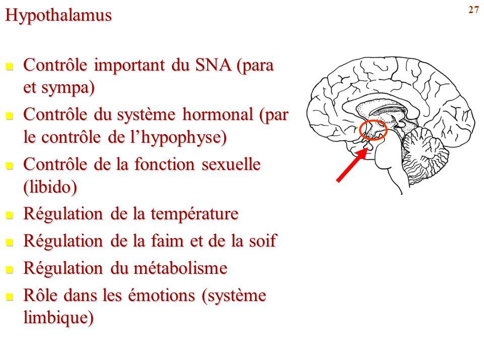 Hypothalamus Contrôle important du SNA (para et sympa) Contrôle du système hormonal (par le contrôle de l'hypophyse)