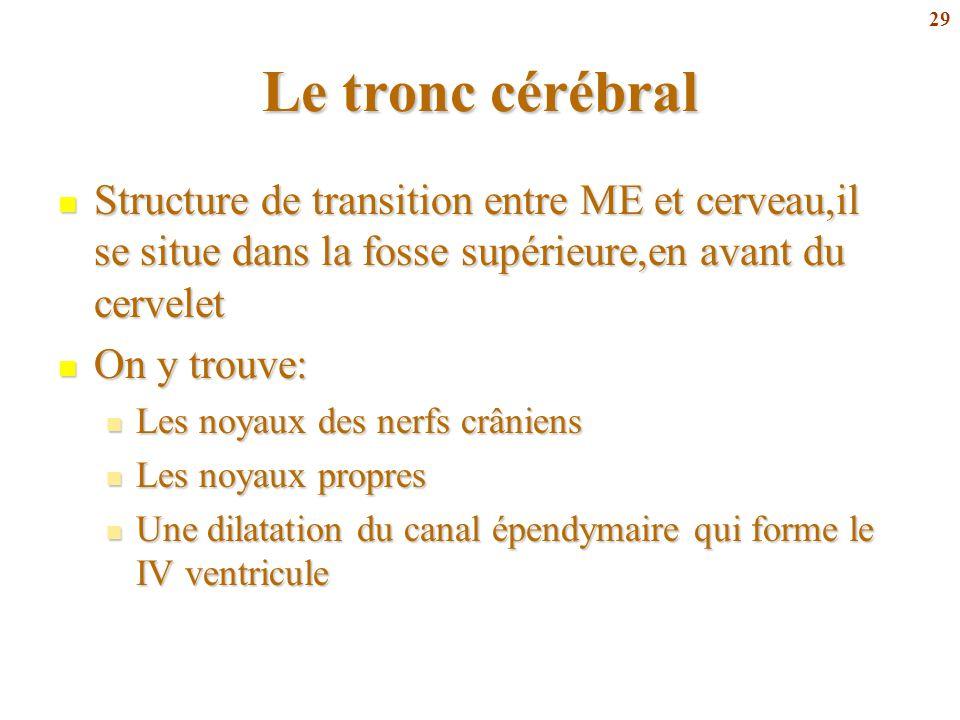 Le tronc cérébral Structure de transition entre ME et cerveau,il se situe dans la fosse supérieure,en avant du cervelet.