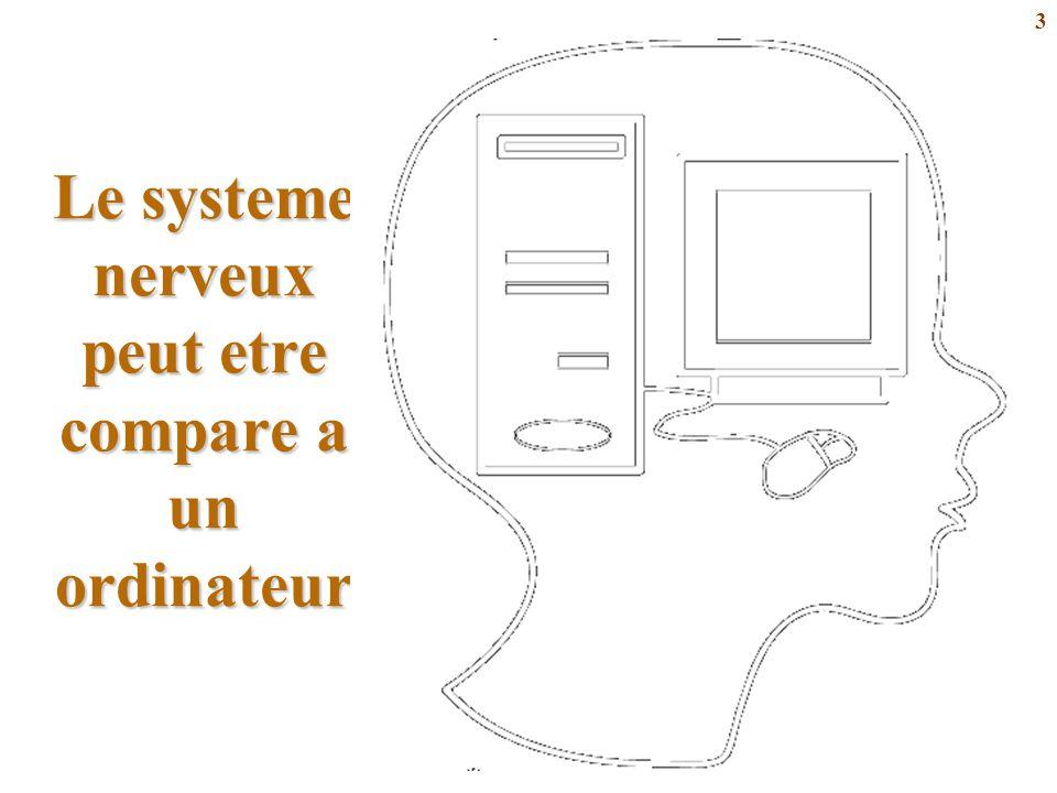 Le systeme nerveux peut etre compare a un ordinateur