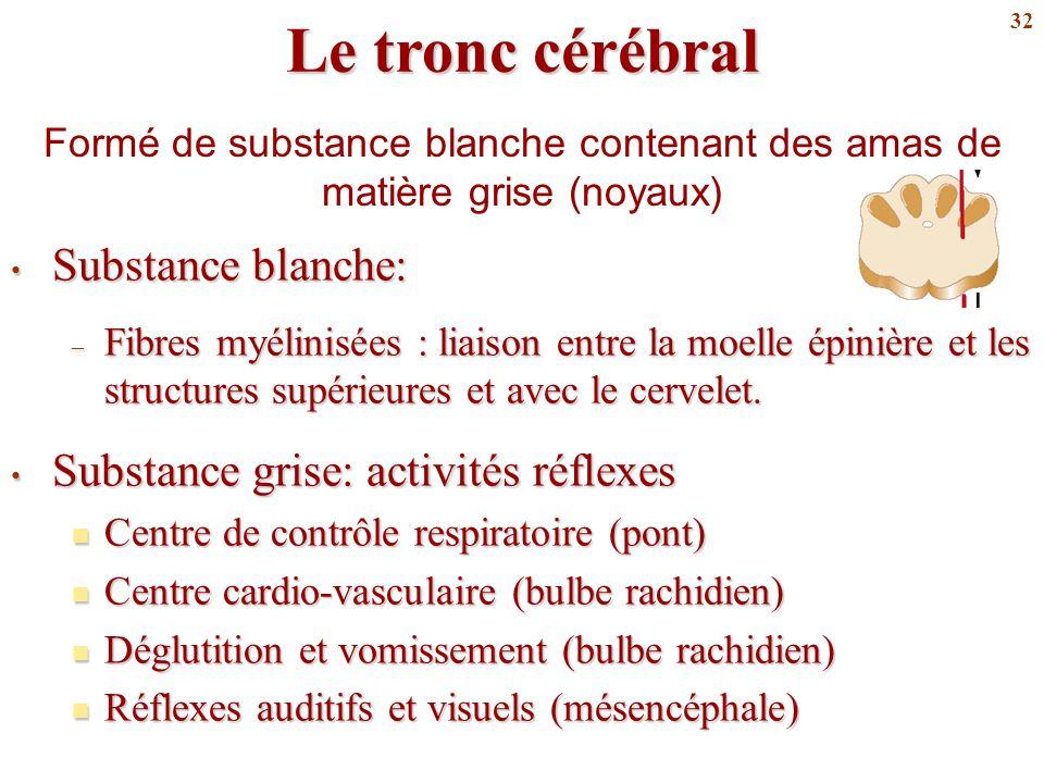 Le tronc cérébral Substance blanche: