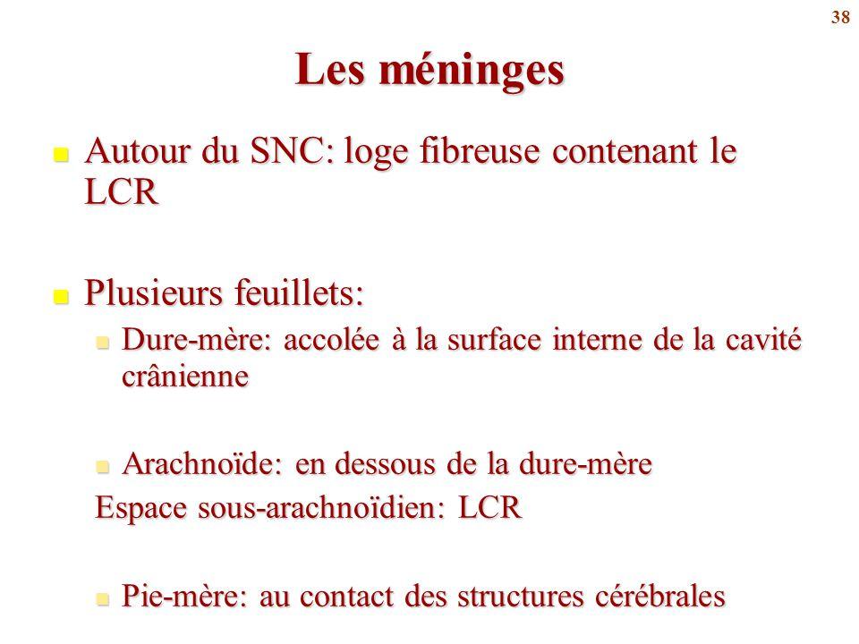 Les méninges Autour du SNC: loge fibreuse contenant le LCR