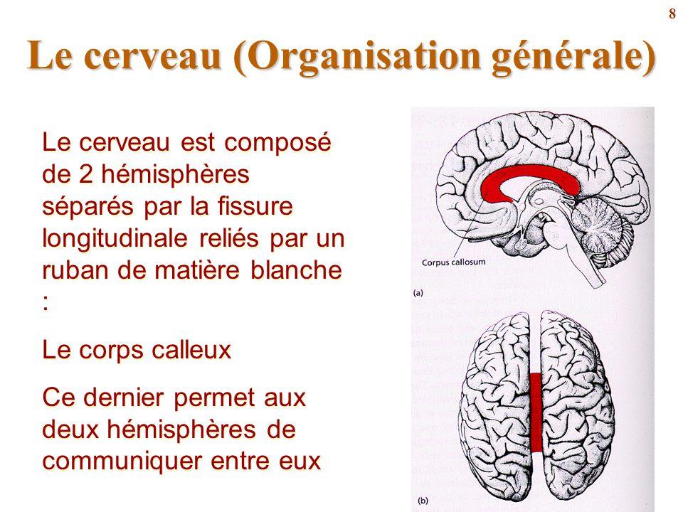 Le cerveau (Organisation générale)