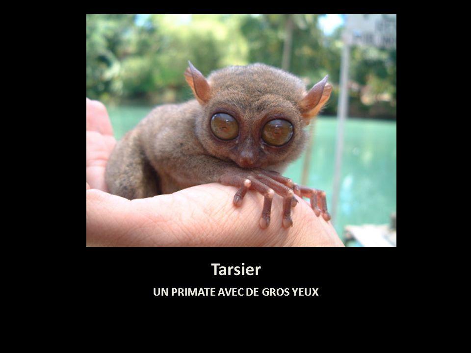 Les 10 animaux les plus moches du monde ppt t l charger - Animaux a gros yeux ...