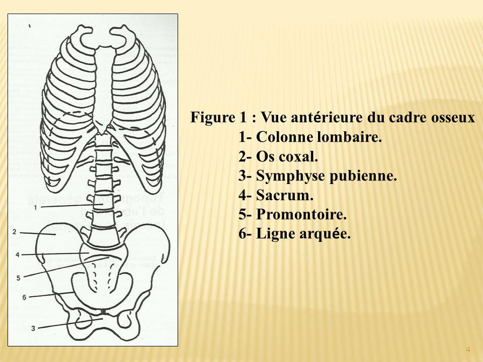 Figure 1 : Vue antérieure du cadre osseux