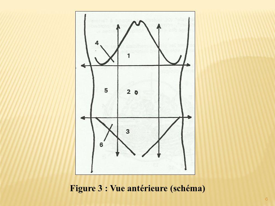 Figure 3 : Vue antérieure (schéma)