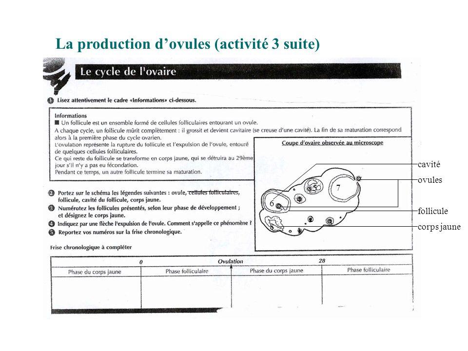 La production d'ovules (activité 3 suite)