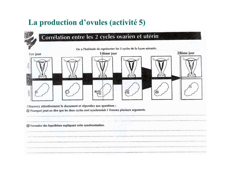 La production d'ovules (activité 5)