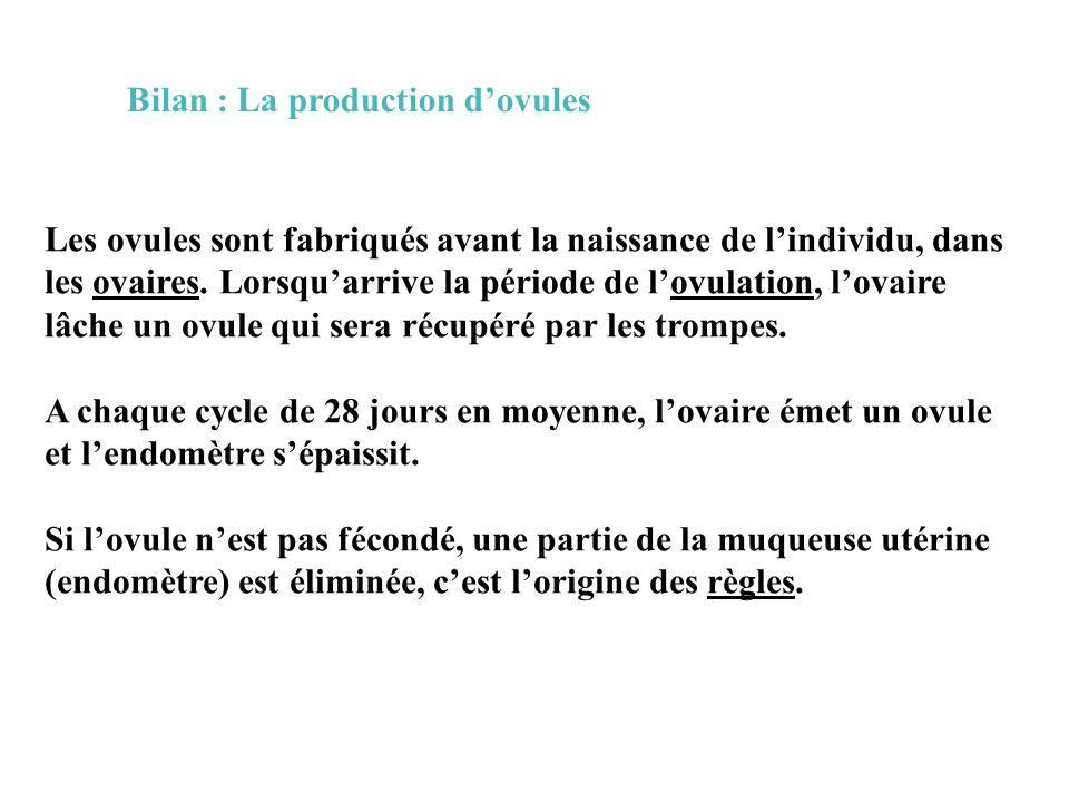 Bilan : La production d'ovules