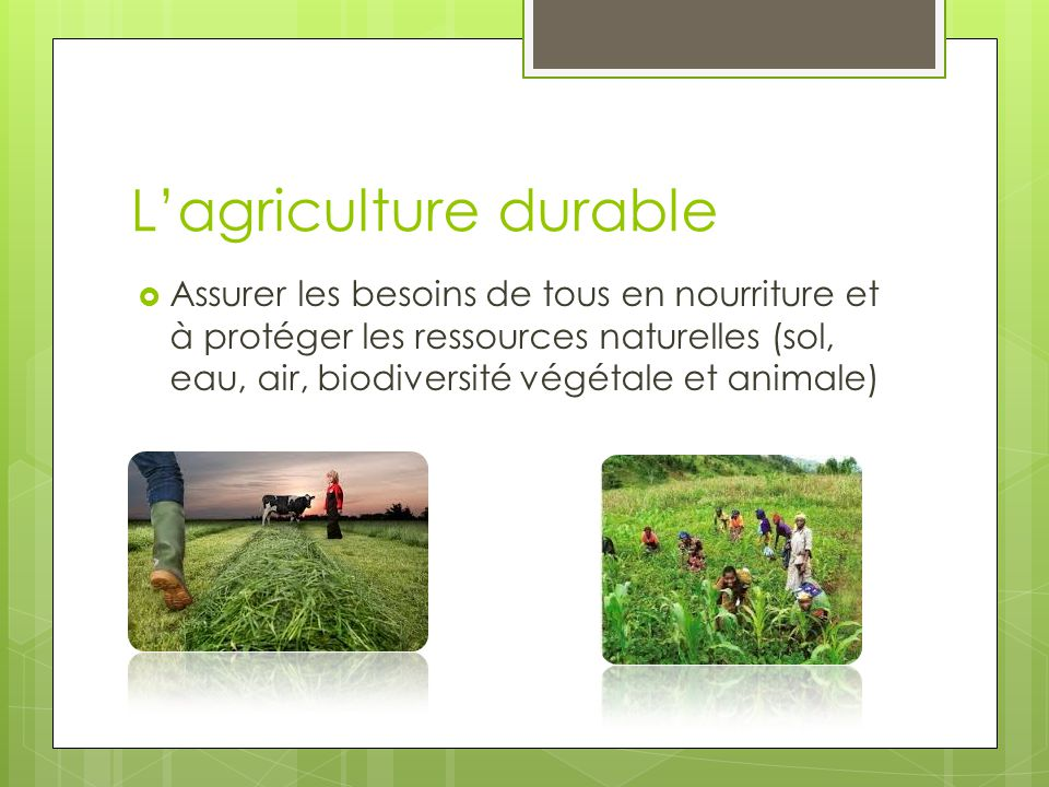 L agriculture intensive vs l agriculture durable ppt for L agriculture