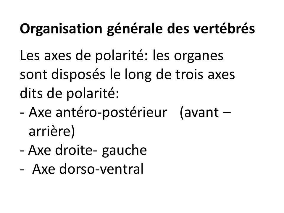 Organisation générale des vertébrés