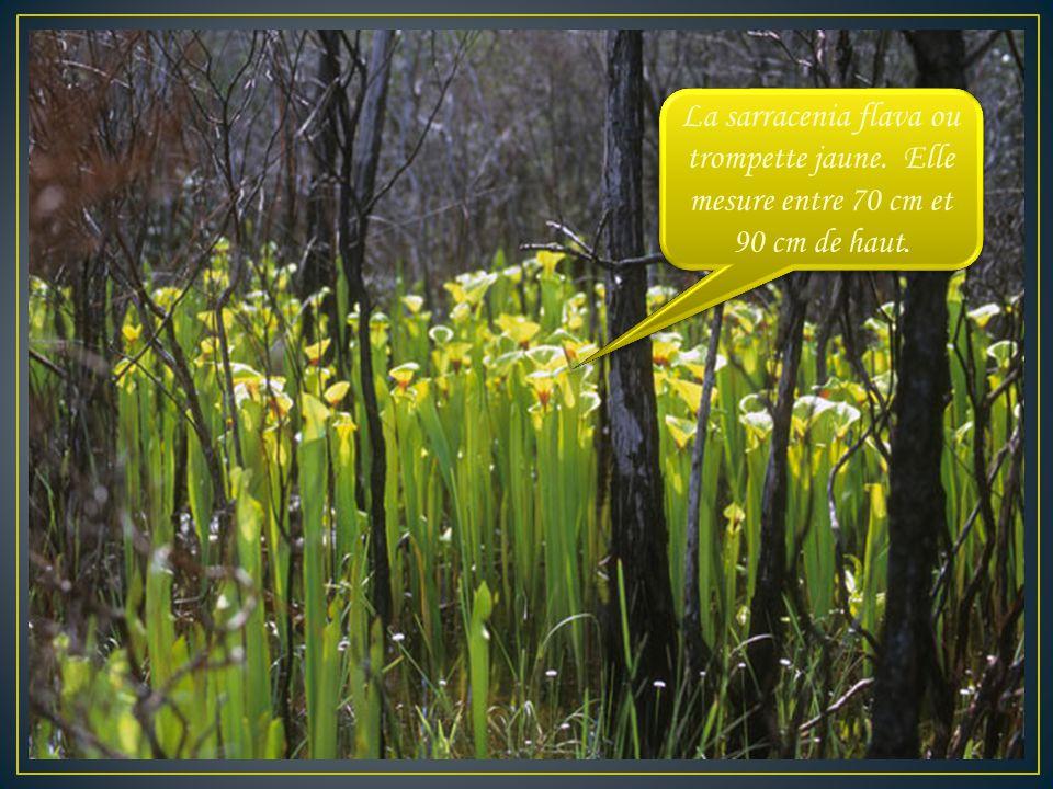 Les plantes carnivores ces plantes qui ont toujours faim - Association plantes aromatiques entre elles ...