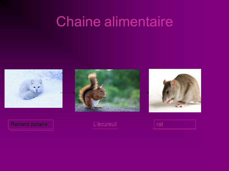 Préférence Le renard polaire par: Stacey Pelletier. - ppt video online  VU93