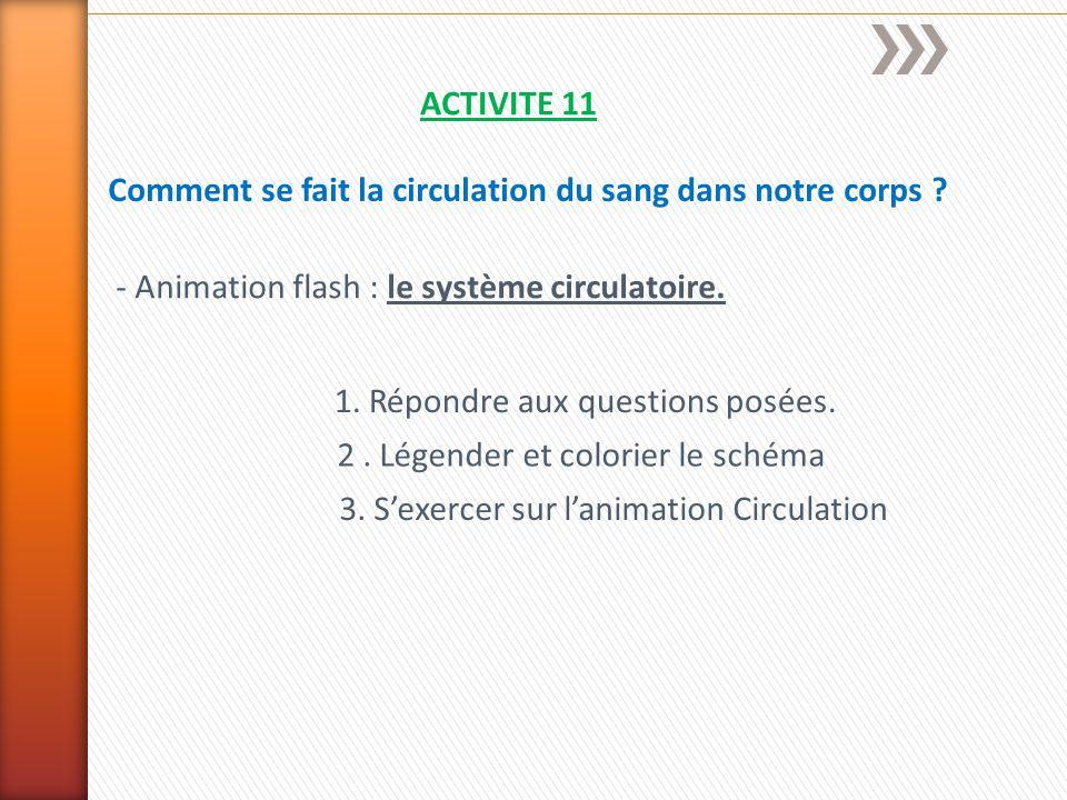 ACTIVITE 11 Comment se fait la circulation du sang dans notre corps - Animation flash : le système circulatoire.