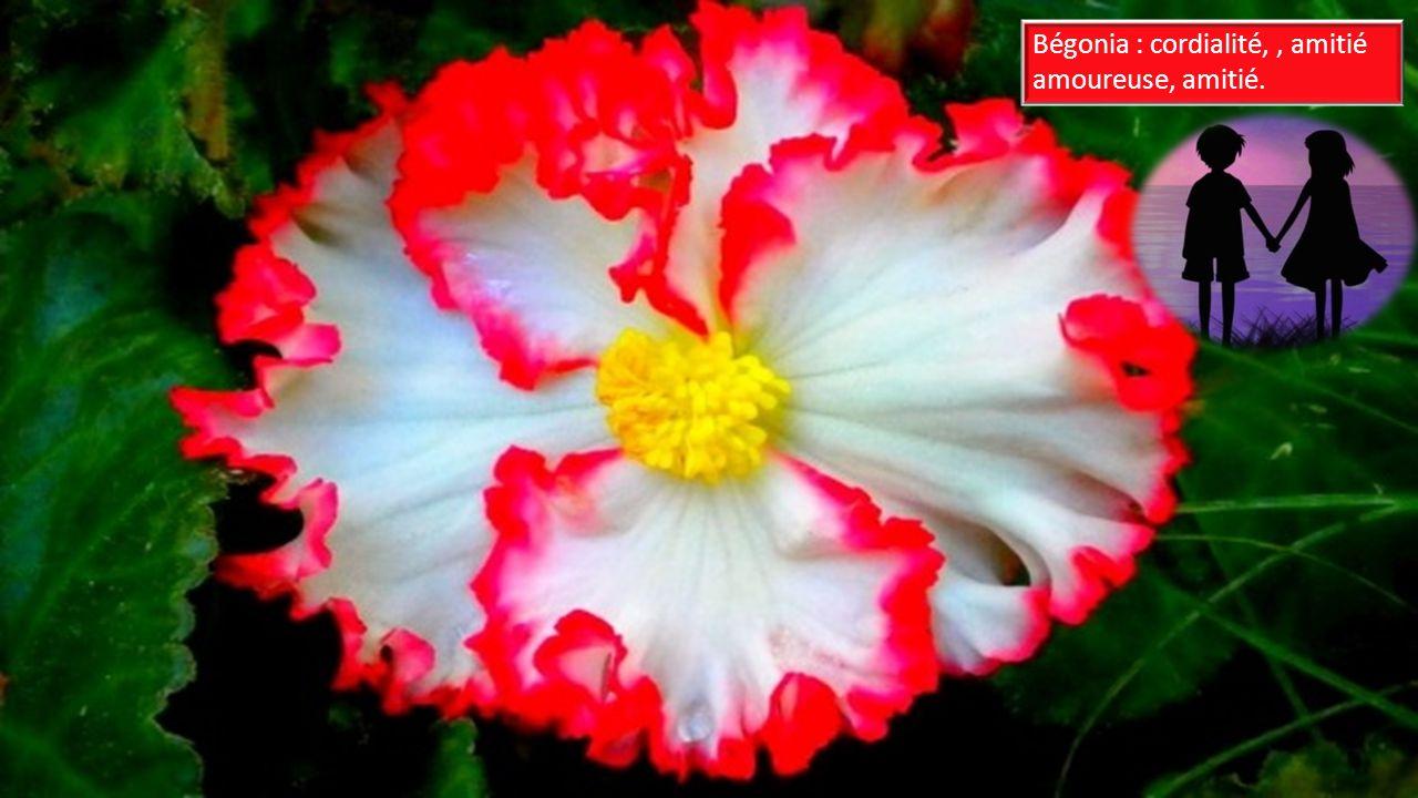 Signification des fleurs ppt video online t l charger for Fleurs online