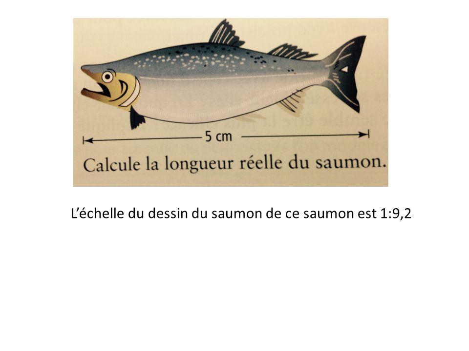 L'échelle du dessin du saumon de ce saumon est 1:9,2