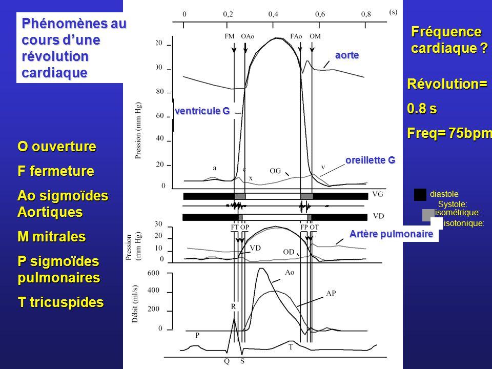 Phénomènes au cours d'une révolution cardiaque Fréquence cardiaque