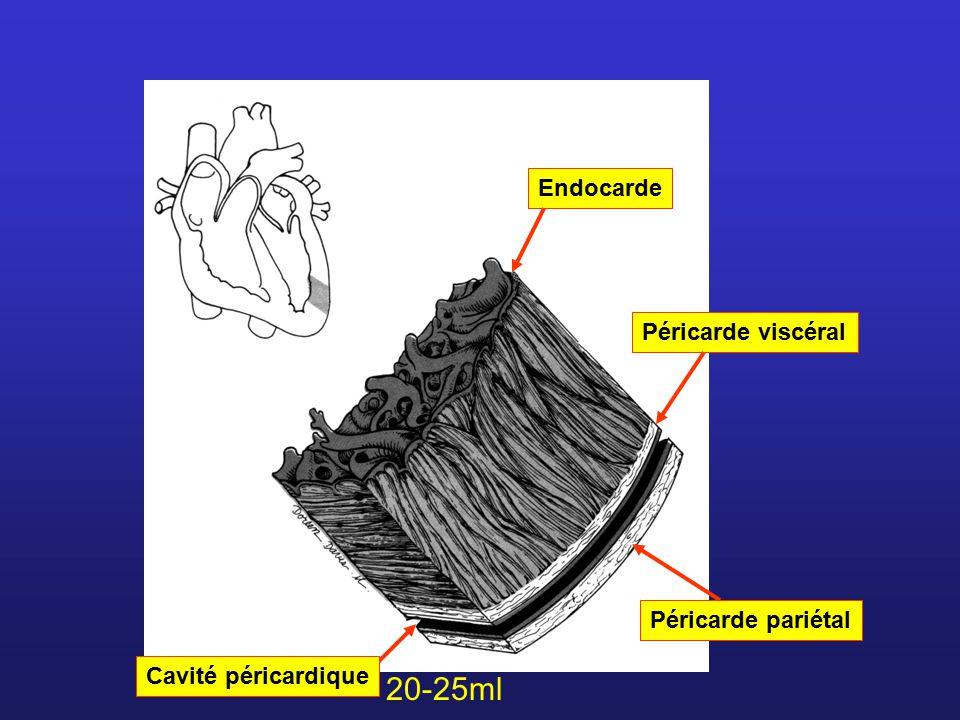 20-25ml Endocarde Péricarde viscéral Péricarde pariétal