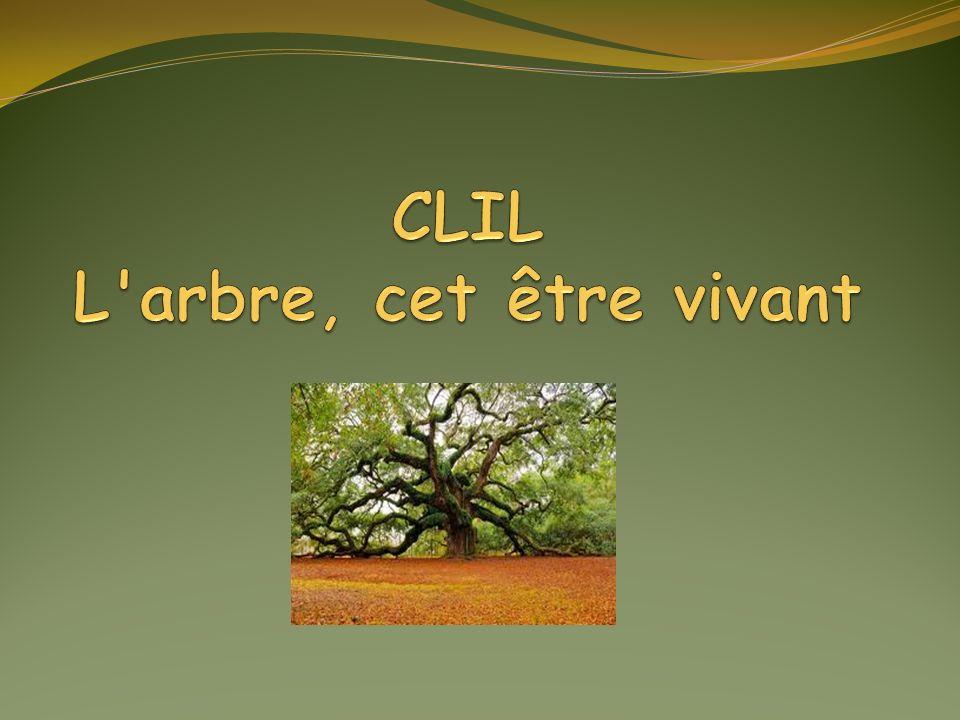 CLIL L arbre, cet être vivant